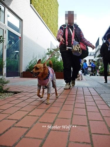 第23回マザーウルフ遠足 横浜レポート_e0191026_00011284.jpg