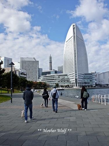 第23回マザーウルフ遠足 横浜レポート_e0191026_22282077.jpg