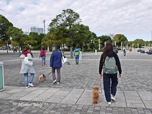 第23回マザーウルフ遠足 横浜レポート_e0191026_22301583.jpg