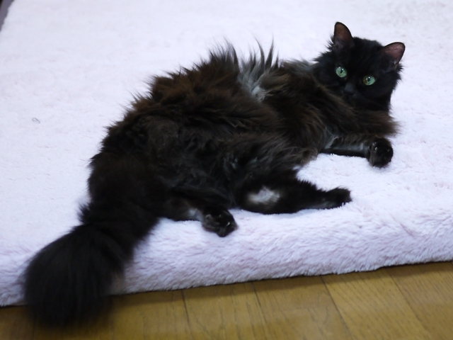 猫のお留守番 モコちゃん編。_a0143140_22242024.jpg