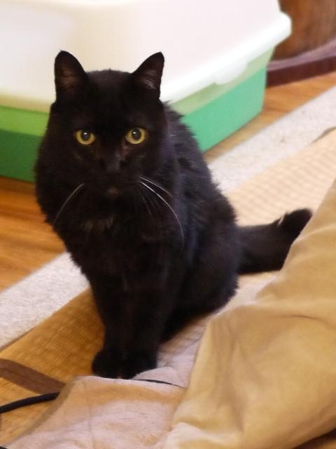 猫のお留守番 けむくん編。_a0143140_22263181.jpg