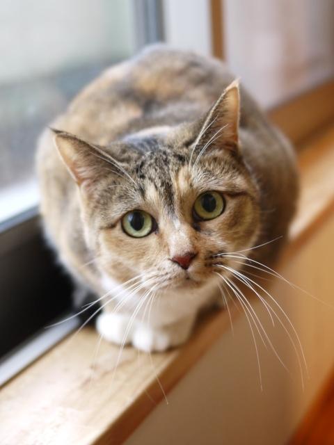 猫のお留守番 きなこちゃん編。_a0143140_22302243.jpg