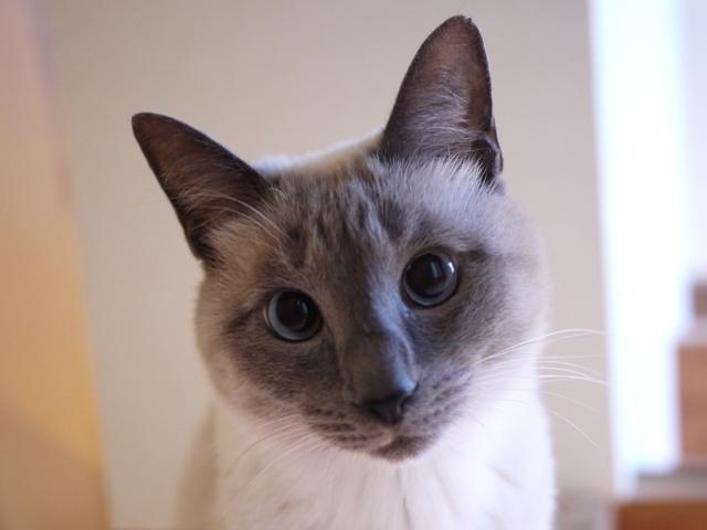 猫のお留守番 しろちゃん編。_a0143140_22353452.jpg