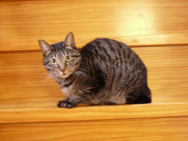 猫のお留守番 きとちゃん編。_a0143140_22384069.jpg