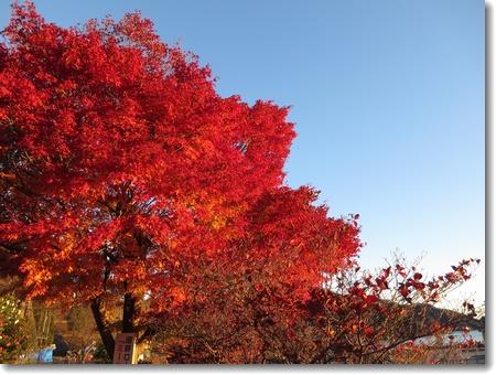 秋から冬へ_c0147448_23441683.jpg