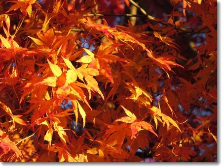 秋から冬へ_c0147448_23442432.jpg
