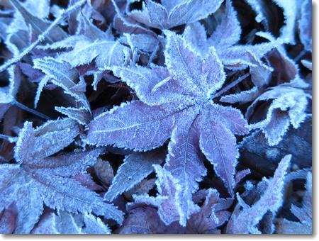 秋から冬へ_c0147448_23445673.jpg