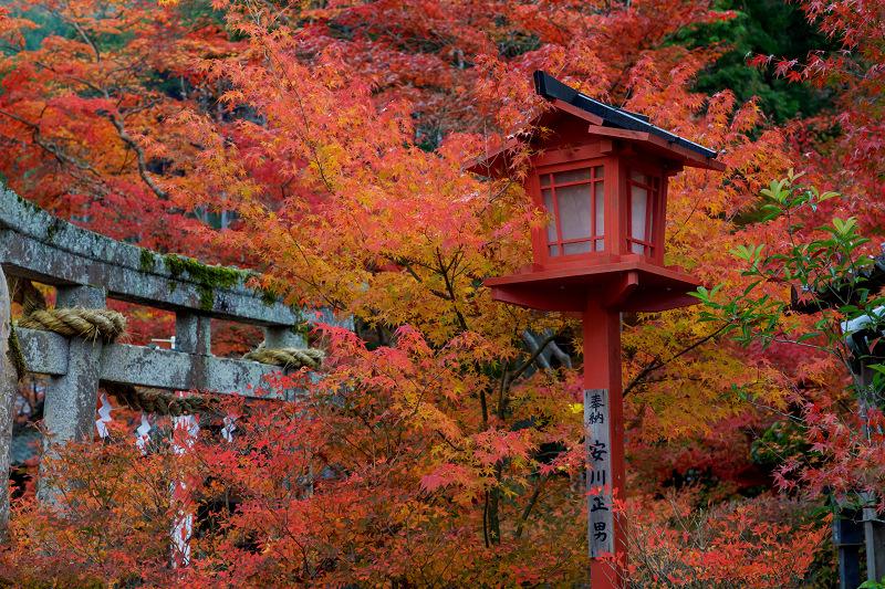 京都の紅葉2017 鍬山神社の錦_f0155048_17115335.jpg