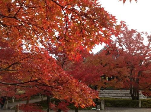 京都紅葉だより 舞妓はん_b0153663_15435281.jpeg