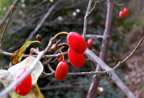 種子、形も色もいろいろに_b0102572_21235459.jpg