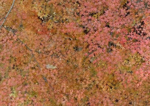 遊びの山、紅葉の絶景スポット_b0102572_22112687.jpg