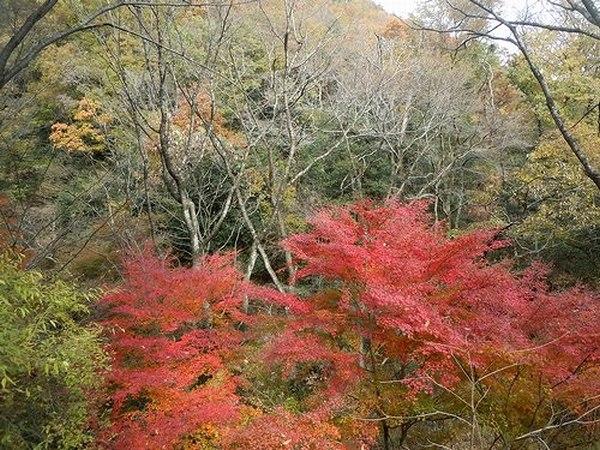 遊びの山、紅葉の絶景スポット_b0102572_2211518.jpg