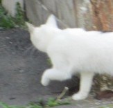 猫の手_b0203907_09461869.jpg