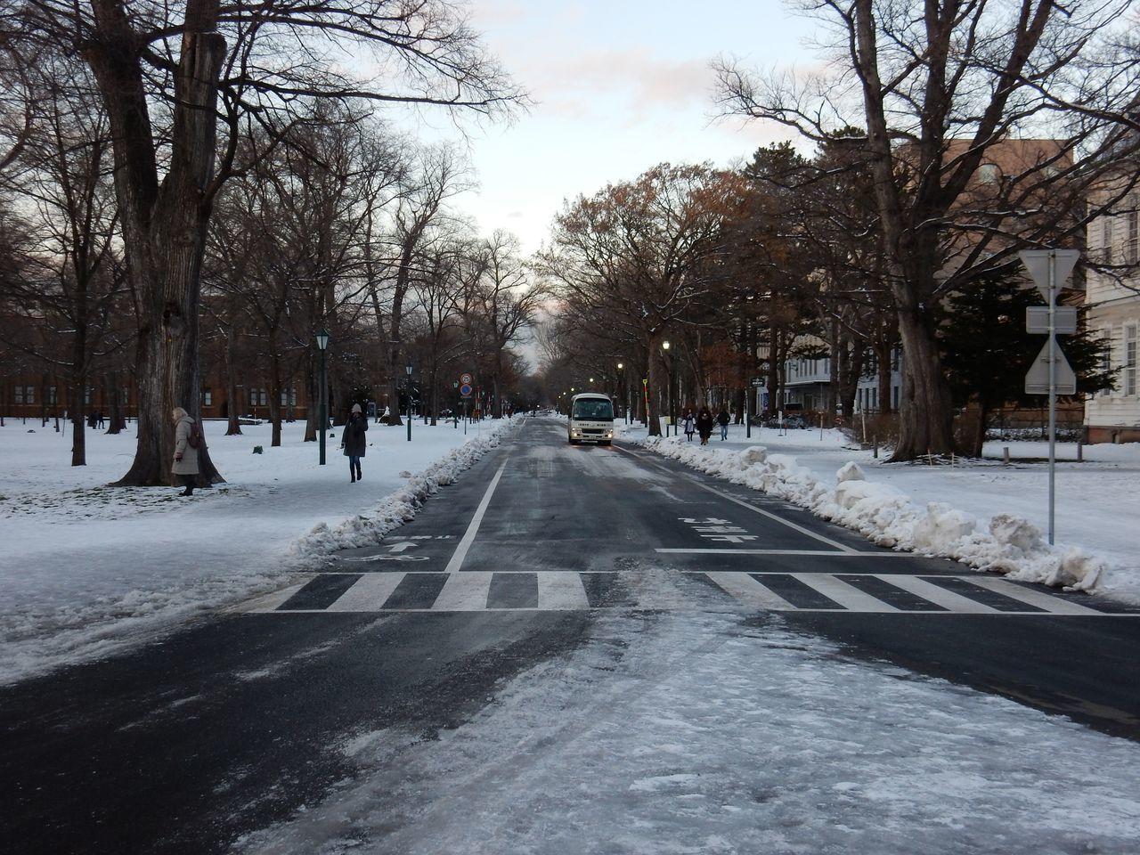 ほぼ真冬日の下、理学部へ_c0025115_22352578.jpg
