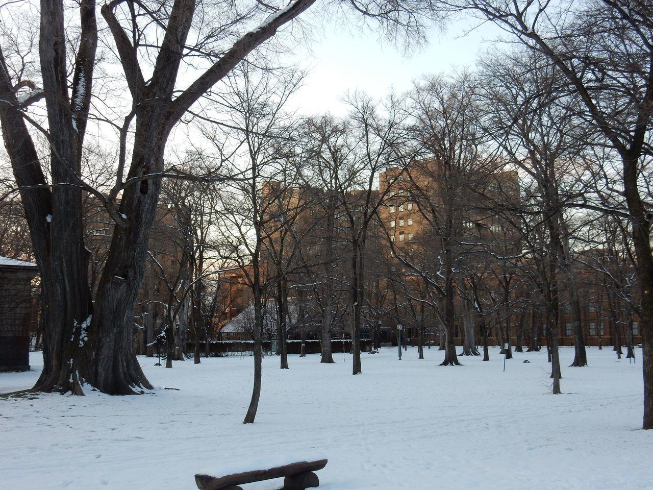 ほぼ真冬日の下、理学部へ_c0025115_22352994.jpg