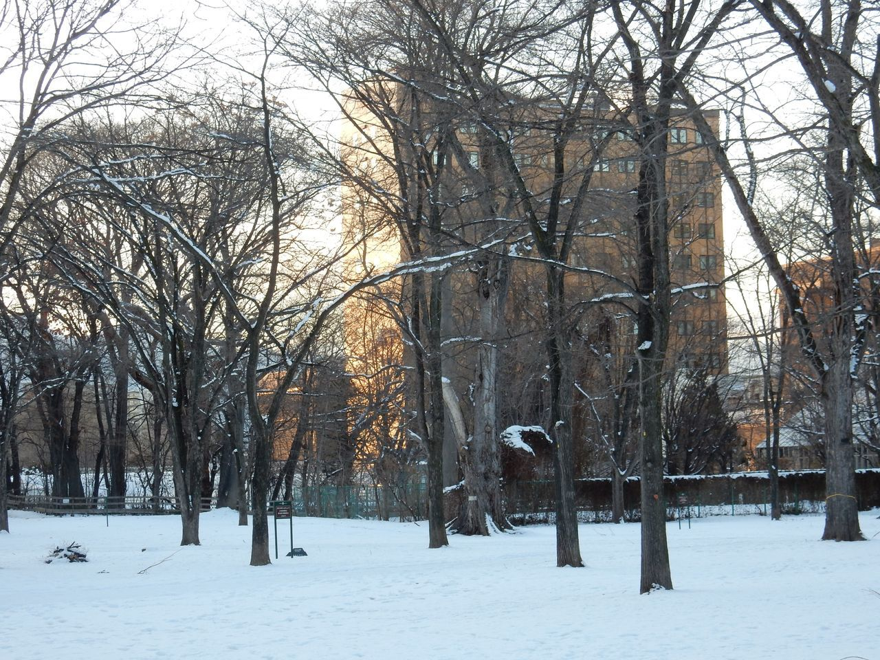 ほぼ真冬日の下、理学部へ_c0025115_22353592.jpg
