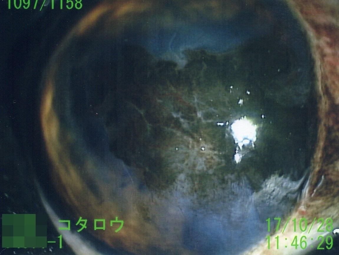 f0128821_22052359.jpg
