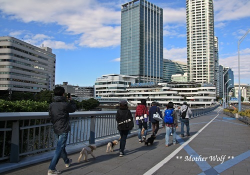 第23回マザーウルフ遠足 横浜レポート_e0191026_18485702.jpg