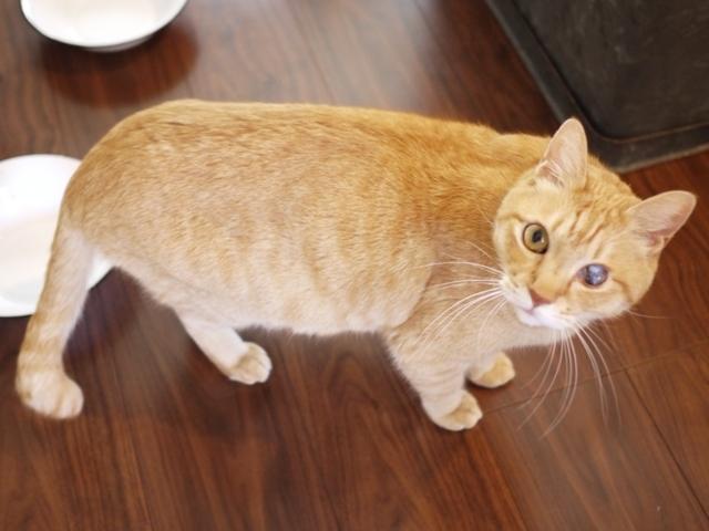 猫のお留守番 ぽぽんたくん編。_a0143140_22070017.jpg