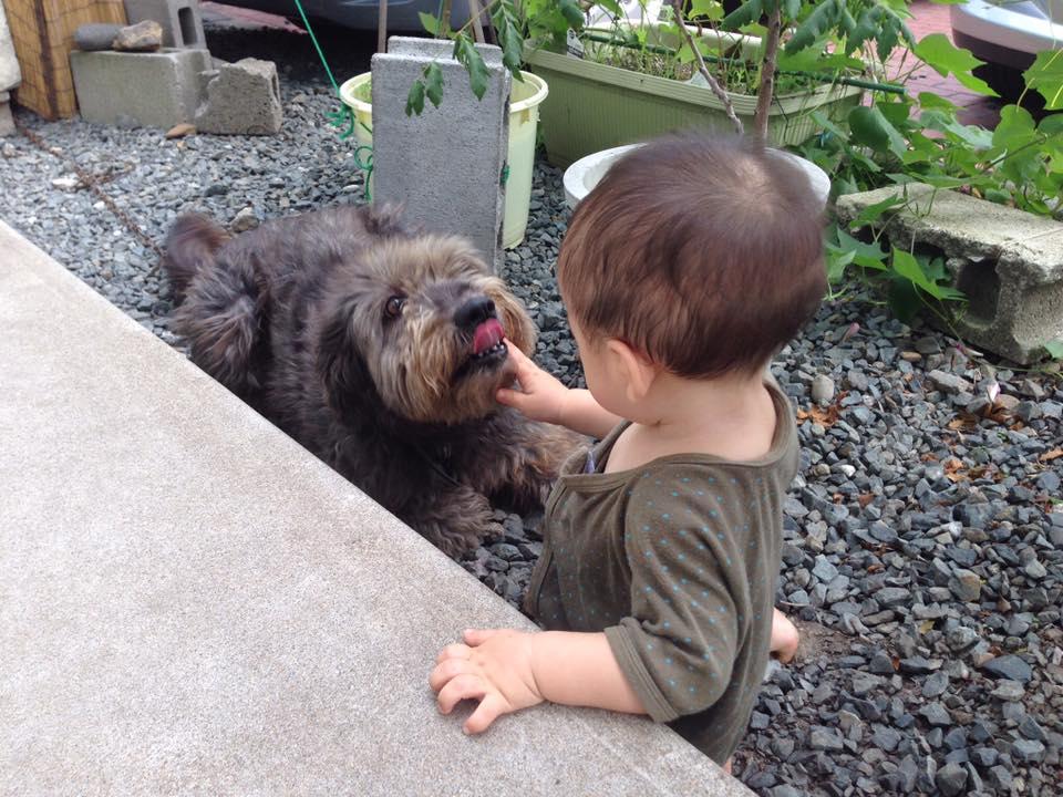 愛犬チチャに見守られながら_b0199244_17375175.jpg