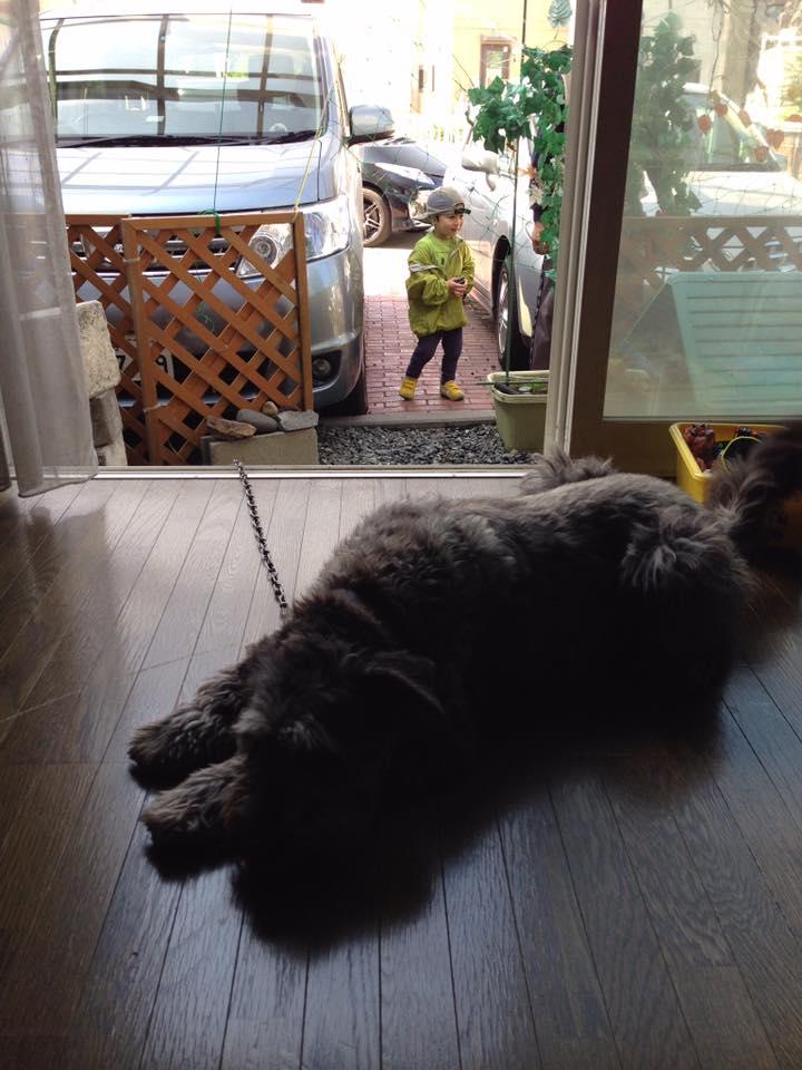 愛犬チチャに見守られながら_b0199244_17382061.jpg