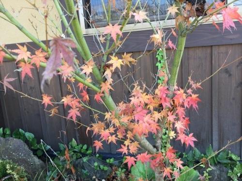 秋の終わり_f0006649_11594855.jpg