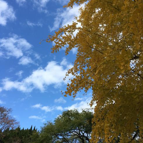 この秋つらかった話。_f0328051_22080877.jpg