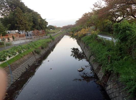 f0131669_20110198.jpg