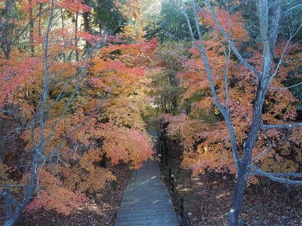 遊びの山、紅葉の絶景スポット_b0102572_17231061.jpg