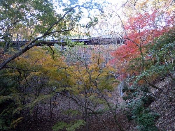 遊びの山、紅葉の絶景スポット_b0102572_1755255.jpg