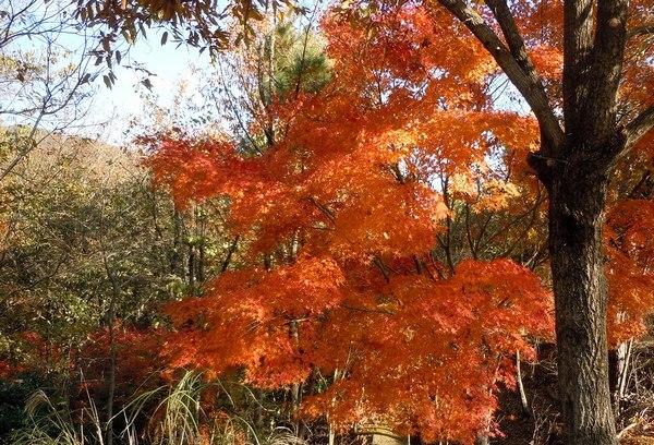 遊びの山、紅葉の絶景スポット_b0102572_17573120.jpg