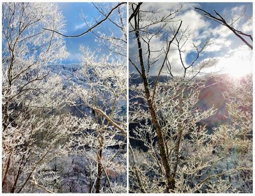 本格的な冬の訪れ(ゴジュウカラたち)_a0204089_5323177.jpg