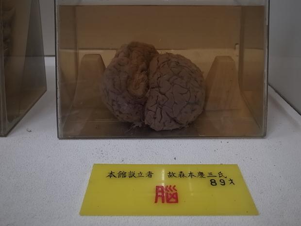 つやま自然のふしぎ館~誕生寺_f0197703_11184558.jpg
