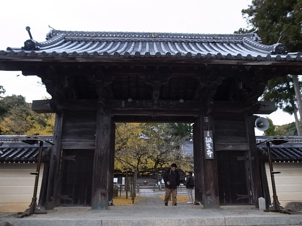 つやま自然のふしぎ館~誕生寺_f0197703_11230997.jpg