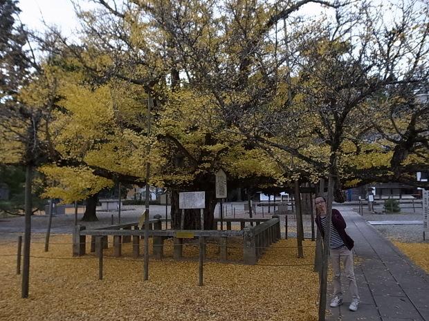 つやま自然のふしぎ館~誕生寺_f0197703_11251243.jpg