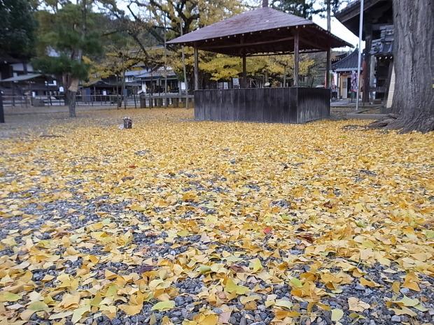 つやま自然のふしぎ館~誕生寺_f0197703_11270435.jpg