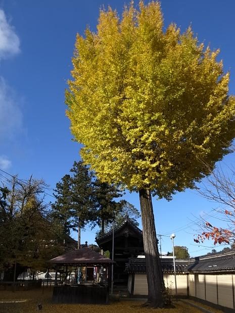 つやま自然のふしぎ館~誕生寺_f0197703_11295862.jpg
