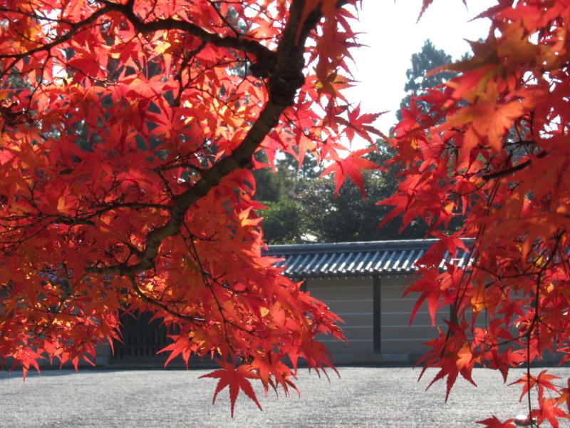 京都御苑 紅葉真っ盛り_e0048413_20531111.jpg