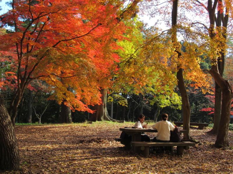 京都御苑 紅葉真っ盛り_e0048413_20542399.jpg