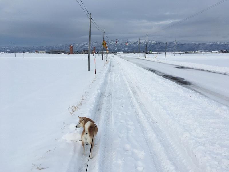 根雪かな_e0227023_10180224.jpg