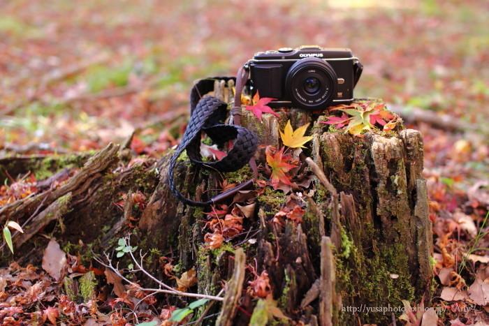 My Camera 相棒 - season2 -_e0347431_23545661.jpg