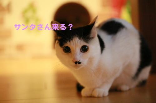 c0342535_15452602.jpg