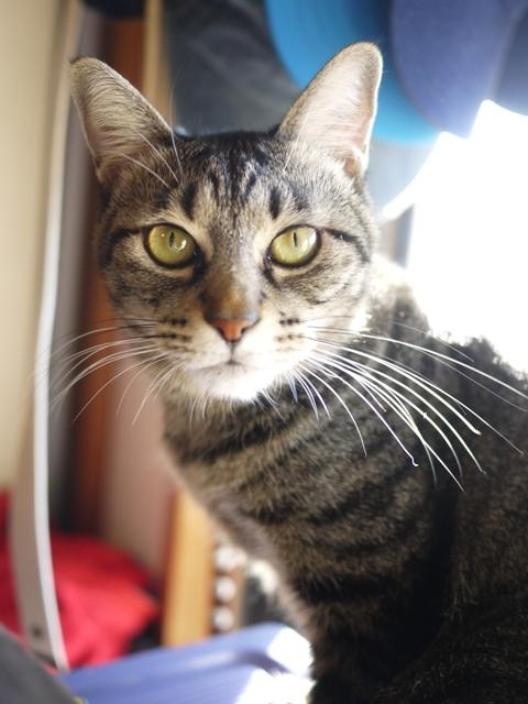 猫のお留守番 キューちゃん編。_a0143140_19442655.jpg