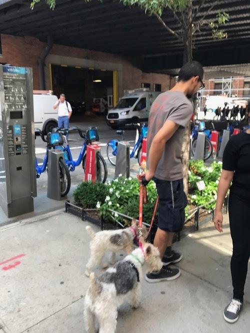 Dog in NYC_c0108595_21495216.jpg