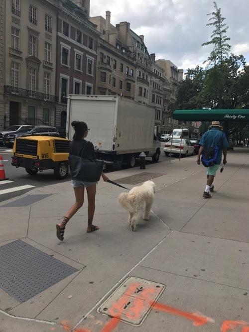 Dog in NYC_c0108595_21571751.jpg