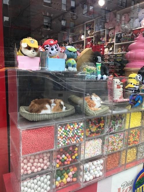 Dog in NYC_c0108595_21591334.jpg
