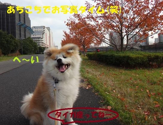 f0121712_07415431.jpg
