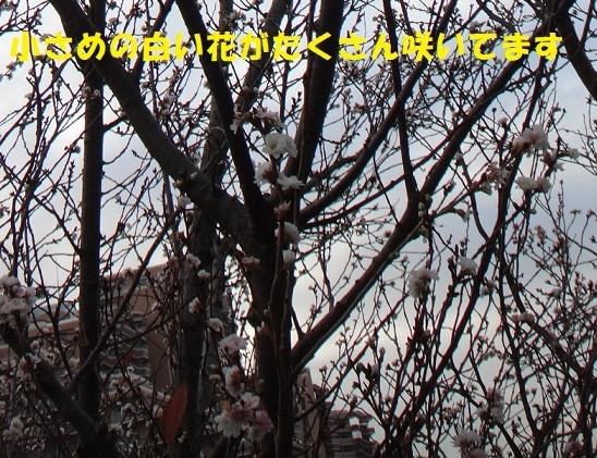 f0121712_08202462.jpg