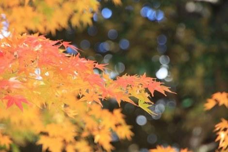 春夏秋冬それぞれの季節に訪れてみたい_a0259130_17390722.jpg