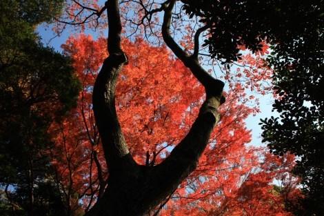 春夏秋冬それぞれの季節に訪れてみたい_a0259130_17564207.jpg
